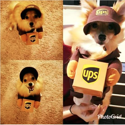 UPS and Puppy Love